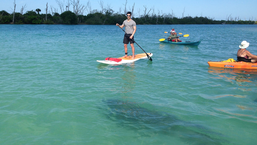 Paddle Board with Manatees in Boca Grande and Englewood Florida