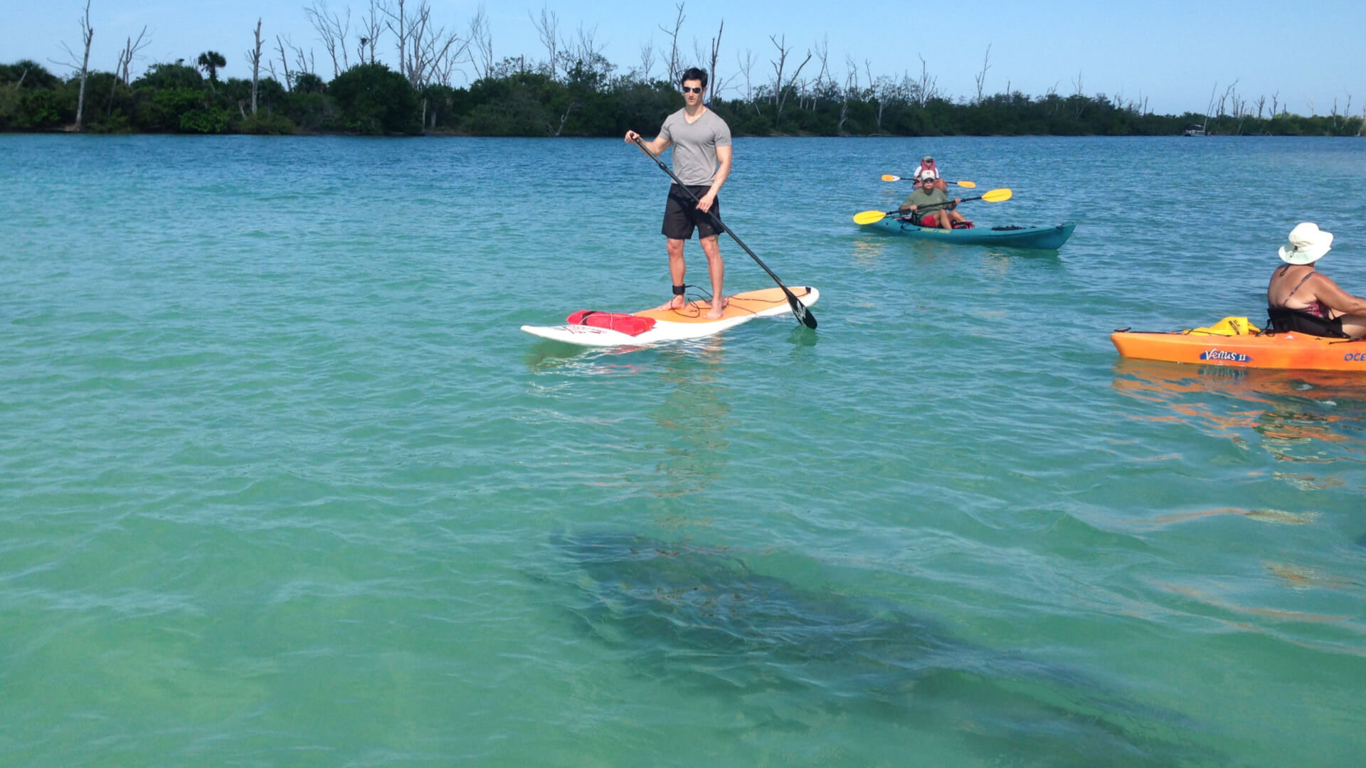Paddle Board and Kayak Guided Eco Tours and Rentals in Englewood Florida