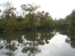Example of Transition Zone Upland and Wetland Habitats Resized