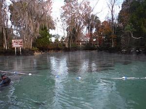 Manatees at Three Sister Springs in Crystal River Florida
