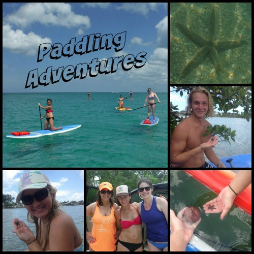 Paddling Adventures with SUP Englewood