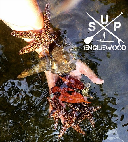 Tour guide finds many marine creatures on kayak guided eco tour