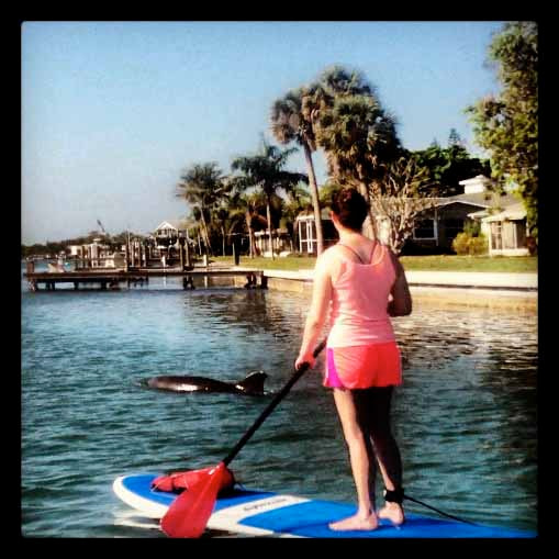 Paddle Board Dolphin tours at Stump Pass Beach State Park