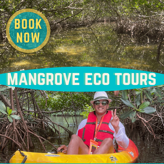 guided kayak eco tours through mangrove tunnels